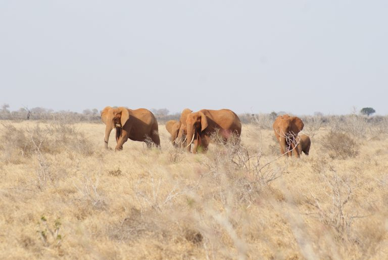 View of the elephants